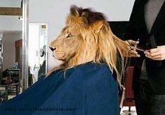 more picture : www.onemillionpicture.com