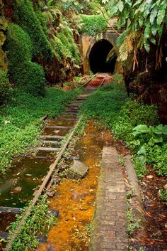New South Wales, Australia - Disused Helensburgh Station - Opened in 1889 and operated for 26 years before closing in 1915 and a newer facility opened. The tracks and tunnel are still in place almost 100 years later, but is overgrown by nature. Abandoned Train, Abandoned Buildings, Abandoned Places, Abandoned Castles, Abandoned Mansions, Foto Nature, Old Trains, Train Tracks, Train Rides
