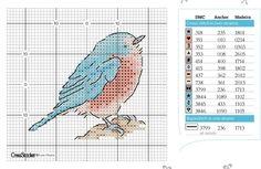oiseau dos bleu