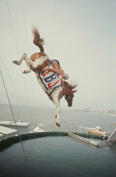 There is a horse diving. Movie: Wild Hearts Can't be Broken. Clydesdale, All The Pretty Horses, Beautiful Horses, Yorkies, Horse Diving, Horse Quotes, Mundo Animal, Appaloosa, Atlantic City