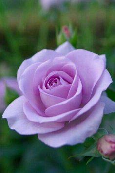 Csodálatos a színe.......
