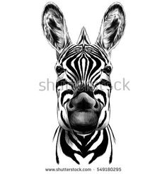 45 Best zebra drawing images in 2018 | Zebra art, Zebra ...