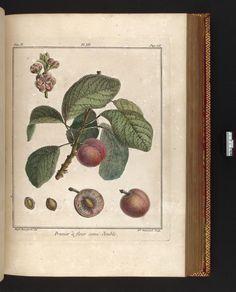 v. 2 - Traité des arbres fruitiers : - Biodiversity Heritage Library