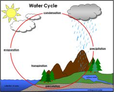 Water Cycle: Includes color charts, definition cards, labels, and blackline masters of the water cycle. Printable Montessori Science Materials by Montessori Print Shop. Montessori Science, Science Classroom, Preschool, Maria Montessori, Science Lessons, Science Projects, Science Experiments, Water Cycle Poster, Water Cycle Project