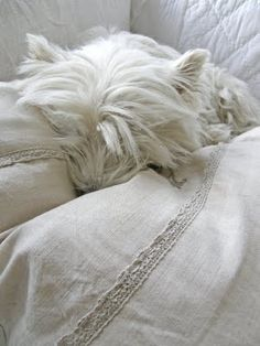 love the detail lace and reminds me of Ellie.  She always loves the most beautiful pillow :)