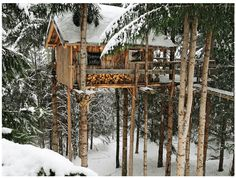 Truly a house in the tree tops