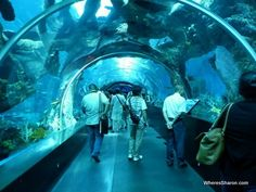 S.E.A. Aquarium Resorts world Sentosa. | This is the largest aquarium in the world and it could also be the best! It is an amazing aquarium full of marine life displayed attractively. There are over 100,000 marine animals of over 800 different species. It makes for an amazing spectacle.