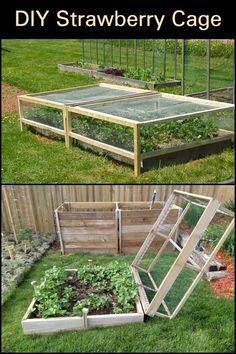 Veg Garden, Vegetable Garden Design, Garden Boxes, Edible Garden, Farm Gardens, Outdoor Gardens, Raised Garden Beds, Raised Planter, Raised Beds