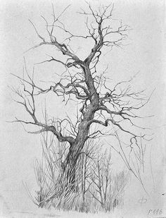 Drawings of nature 31 Tree Types Pencil Drawing Ideas Tree Drawings Pencil, Art Drawings, Tree Sketches, Nature Drawing, Desenho Tattoo, Guache, Landscape Drawings, Realistic Drawings, Pen Art