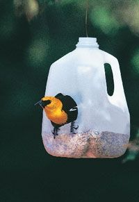 You can add another spot for suet or seeds by recycling. birdsblooms