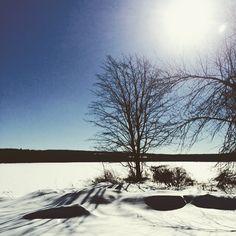 #WonderWatch 2015-22 Winter Sunscape #TreesPlease 6
