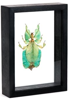 Framed insects!