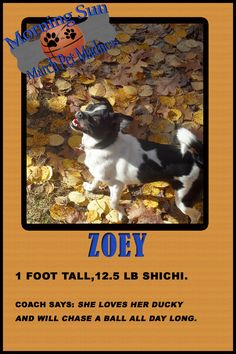 Vote for Zoey!!!!!!! pet bracket cards