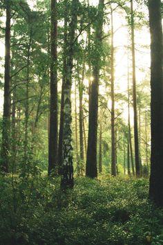 Forest Misty Morning, by iCECREAMTRUCKFUCK