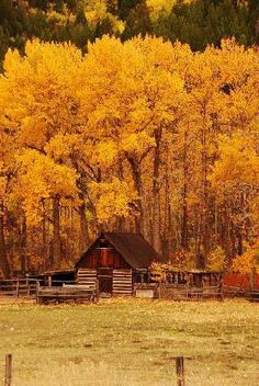Barn in the Fall