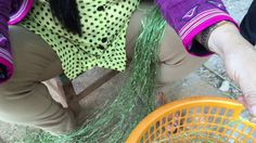 モン族伝統のヘンプ糸績み実演 traditional hand spun hemp yarn work by hmong people in T...