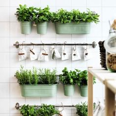 A herb garden will thrive inside with as much natural light as possible, giving you fresh herbs all year round.