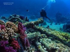 Shark and Yolanda reef, Red Sea. Photo taken in May 2012. Olympus XZ-1 28th ISO 200, f / 5, 1/160 sec Natural light. #underwater