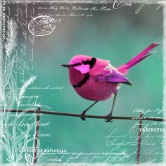 by Mistra - Pink Bird