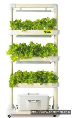 Easy for anyone, Home Farm - LED Hydroponic Cultivator