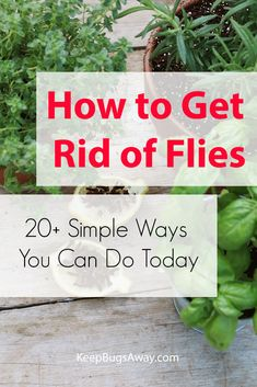 Want to learn how to get rid of flies? Read this post now to discover 20 simple ways you can do today to kill flies and get rid of them for good. Homemade Fly Traps, Homemade Fly Spray, Weed Killer Homemade, Get Rid Of Flies, Get Rid Of Ants, Killing Flies, Flies Outside, Small Herb Gardens