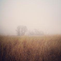 Trees through the Mist