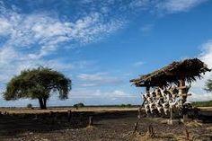 Paket Wisata Banyuwangi 1 Hari 1 Malam Valuable Tour - A - paket wisata banyuwangi, paket tour banyuwangi Giraffe, Tours, Mice, Animals, Felt Giraffe, Animales, Computer Mouse, Animaux, Giraffes