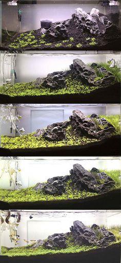 48cm Tank: 1st Scape | par faizalsamsi@gmail.com . Pin by Aqua Poolkoh