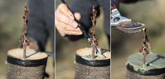 Enxertar as árvores frutíferas é mais fácil do que você pensa! Veja é quando e como fazer