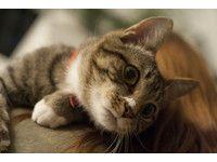 貓咪天生喜歡往小空間鑽,有時候會給主人帶來「驚喜」!皮聘(Pippin)是一隻好動活潑的貓,如果沒看過牠的病歷表,絕對想不到牠曾經摔到腿骨折,還曾被人拋棄,換過2次名字。現任主人說,皮聘特別喜歡鑽到書櫃裡,在書架上出沒,彷彿在說「主人,你要看書還是看我?」