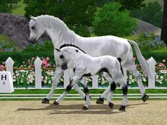 Sims 3 Horses Jumping | Dressage or hunter/jumper prospect.