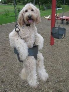 Is anyone going to give me a push??????