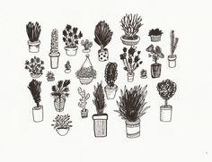 Potted plants illustration