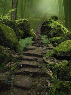 placestoseebeforeyougoblind:  Sherwood Forest Nottinghamshire, England