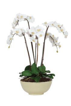 First quality guaranteed on over fabric patterns. Faux Flower Arrangements, Flower Centerpieces, Faux Flowers, Silk Flowers, Fabric Online, Ceramic Bowls, Fabric Patterns, Flower Power, Orchids