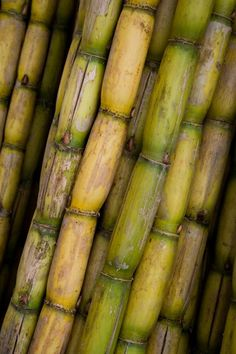 CANA DE AÇÚCAR (BRASIL/RJ) Sugar cane is a grass plant. It has been grown in gardens over 4000 years. Over of the worlds sugar comes from sugar canes. Haitian Food Recipes, Jamaican Recipes, Fruit And Veg, Fruits And Vegetables, Puerto Rico, Photo Fruit, Comida Boricua, Puerto Rican Recipes, Beautiful Fruits
