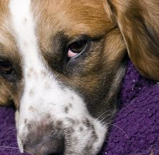 How to Remove Dog Hair from Blankets