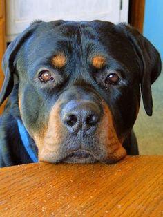 5 Dog Breeds For Single Women