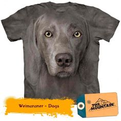 Profess your love for Man's Best Friend! Zany Zak is proud to offer our Weimaraner dog face t-shirt! This T-shirt features an over-sized relaxed fit, with reinforced double-stitching on all seams. Perfect for a nightshirt or great gift for any dog lover! Weimaraner, Weimari Vizsla, Zebras, T Shirt Chien, Ghost Dog, Big Face, 3d T Shirts, German Shorthaired Pointer, Plus Size T Shirts
