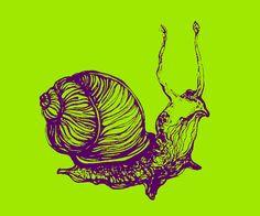 snail - graphics - illustrations - Murga