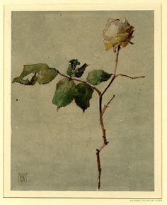 iamjapanese:    Alfred William Rich(British, 1856-1921)  December Rose     Pen and brown ink and watercolour, on grey-toned (?) paper