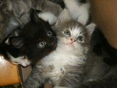 O Ceiling Cat... by MadForHatters.deviantart.com on @deviantART