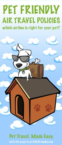 Airline Pet Travel Policies - Which airline is right for your pet?