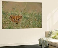 Categories wall-murals, Prints and Posters at Art.com