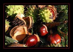 Kastanjes   Flickr - Photo Sharing!