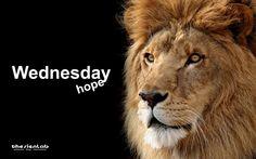 ... un mercoledì da leoni?   ... Big Wednesday?