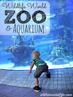 The Wildlife World Zoo and Aquarium on the west side of Phoenix is an unknown treasure!  Complete with sharks, kangaroos and a sky ride.  This place is fantastic!