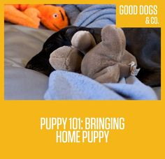 Tips and reminders for the day you finally bring your new puppy home!  And yes, you can totally feel as excited as a kid on Christmas morning when you bring home that puppy. It's awesome.