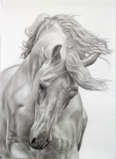 my work is a white horse