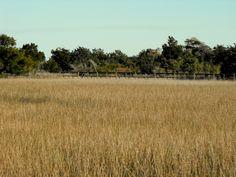 Marsh at Ocean Isle Beach, North Carolina